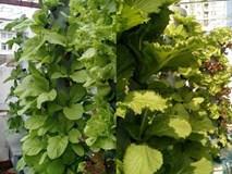Kỳ lạ: Trồng rau trên cột nhựa, vườn cây mọc nghiêng trên lưng trời