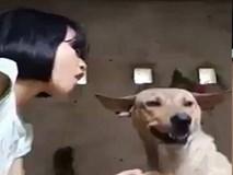 """""""Xin anh đừng"""" phiên bản tội nghiệp chú chó"""
