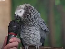 Con vẹt thông minh nhất thế giới