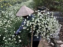 Mùa cúc họa mi: Chị em phát cuồng, dân Nhật Tân cười thầm