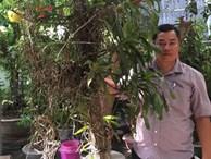 Vườn lan rừng quý hiếm và 3 bí quyết thành công của chủ vườn