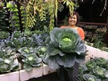 Mê mẩn vườn rau xanh mướt trên sân thượng 40m² với chi phí 7 triệu đồng của người chồng chiều vợ