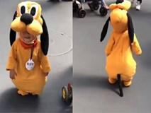 Chú cún con đi dạo phố đáng yêu nhất quả đất