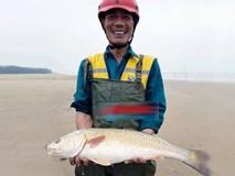Câu được con cá sủ vàng, trả 400 triệu vẫn chưa bán