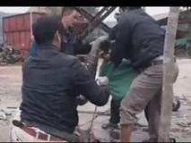 """CLIP: 6 người đàn ông vật lộn bắt """"quái vật"""" rắn nặng 20 kg ở Vĩnh Phúc"""