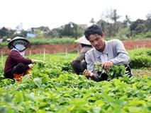 Bỏ phố về quê trồng 3ha rau thơm, thu hơn 6 triệu/ngàyBỏ phố về quê trồng 3ha rau thơm, thu hơn 6 triệu/ngày