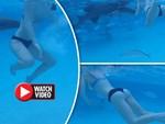 Đi bơi tại vùng biển có cảnh báo nguy hiểm, thanh niên Brazil bị cá mập cắn đứt của quý-3