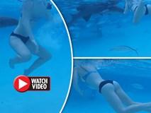 Video: Đang bơi, cô gái mặc bikini bị cá mập lao vào cắn