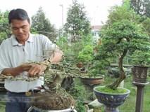 Bỏ nghề giáo viên về trồng cây cảnh, bỏ túi 200 triệu đồng/năm