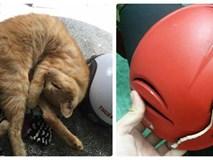 Đưa mèo đi chữa bệnh giúp khách, shipper bị chủ mang hung khí chém vỡ mũ bảo hộ