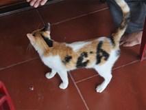 Xôn xao với chú mèo có 'bớt' hình chữ 'cá' độc đáo