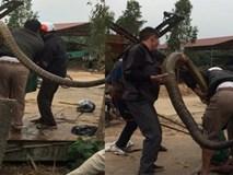 Chuyên gia tiết lộ sốc về con rắn khổng lồ nặng 20kg ở Vĩnh Phúc