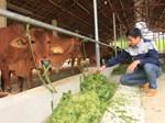 Bỏ lương ngàn USD đi nuôi lợn, ngay năm đầu thắng lớn 1,7 tỷ đồng-2