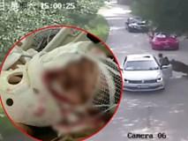 Người mẹ bị hổ vồ đến chết trong công viên hoang dã, con gái đòi bồi thường 4 tỷ đồng