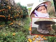 Xót xa hình ảnh người nông dân khóc nghẹn bên 450 gốc quất bị phá hoại dịp cận Tết