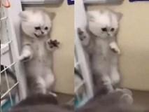Chết cười với khoảnh khắc sợ hãi của mèo con