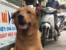 Chú chó siêu thông minh, bắt trộm cho chủ