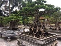 Bộ sưu tập cây cảnh trăm tỷ hiếm có của đại gia Hà thành