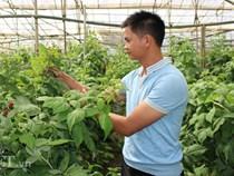 """Bỏ lương 7 triệu, về quê trồng """"siêu thực phẩm"""", thu gần 1 tỷ"""