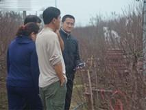 Gần 1 tháng nữa mới Tết, làng đào Nhật Tân đã tấp nập khách đến đặt mua, đặt thuê đào trưng Tết