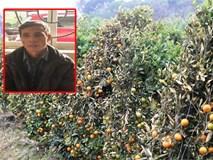 Bắt kẻ gian phá hoại 400 gốc quất của 2 nông dân