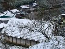 Toàn cảnh tuyết bao phủ trắng đường về Sa Pa