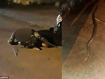 Bắt con trăn dài gần 3m bên vệ đường về đem bán, người đàn ông không ngờ phải chịu cái kết đau thương ngay khi đang lái xe máy