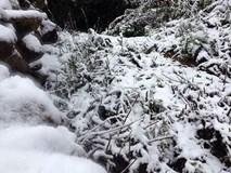 Tuyết phủ trắng xóa đất trời Ô Quy Hồ