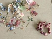 Cô nàng số nhọ bị chuột gặm nát hết tiền bỏ lợn, đã thế còn khuyến mãi thêm bầy chuột con