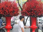 Cận Tết, thương lái đổ về làng mai mới nổi ở ngoại ô Sài Gòn-4