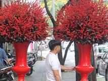 Đại gia chi 100 triệu chơi hoa mai Mỹ, đông đào đỏ nhập từ Hà Lan