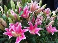 4 loại hoa cực đẹp trưng Tết, nhưng nhà có bà bầu thì đừng dại mua về nếu không chẳng khác nào rước họa