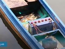 Xin chuộc lại cá phóng sinh bị bắt ngay sau khi được thả