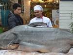 Thủy quái Vàm Nao và giai thoại loài cá giá bán chục cây vàng-5