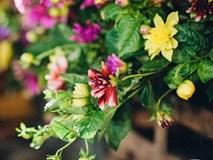 6 loại hoa cổ truyền chưa bao giờ hết hot mỗi độ Tết đến, xuân về