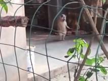 Phì cười clip chó đứng bằng 2 chân, nhún nhảy theo nhạc cực dẻo