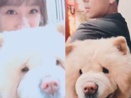 """Trấn Thành - Hari Won chơi với chó cưng đầu năm Mậu Tuất gây """"bão"""""""