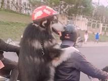 Chàng trai Đà Lạt đi xe cub, trước chở 'hoàng thượng' mèo, sau chở 'boss' đội mũ cực ngầu
