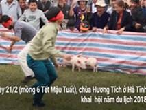 Video: Những pha hài hước khi chơi trò bịt mắt bắt heo ở hội chùa Hương