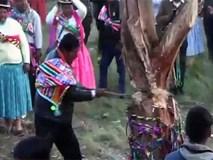 Tham gia lễ hội chặt cây, người đàn ông không may bỏ mạng oan uổng