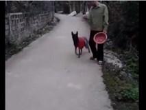 Kinh ngạc khả năng làm việc nhà của chú chó thông minh