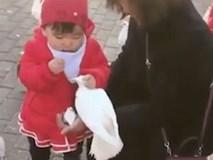 Đi chưa vững, nhưng cô bé này cực nhanh tay khi tóm cổ bồ câu giành thức ăn