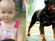 Dắt con gái 1 tuổi về nhà bà ngoại, bà mẹ đau đớn khi chứng kiến con bị chó hàng xóm tấn công tới tử vong