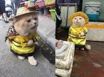Hết bán cá lại trông phản thịt, chú mèo nổi tiếng khắp chợ Hải Phòng lên trang nhất tạp chí nước ngoài