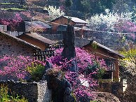Đừng lỡ hẹn với Sapa mùa hoa đào nở rộ trong tháng 3 này