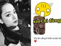 """Chi Pu đồng ý ra MV chiều fan, lực lượng cư dân mạng ngăn cản gấp: """"Xin Chi đừng"""""""