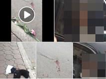 Tố người lái ô tô đâm chết mất chó cưng, chàng trai nhận loạt bình luận không ngờ