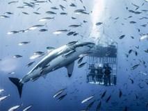 Sự thật đằng sau những khung hình chụp cá mập cận cảnh, đẹp rúng động nhưng cũng cực kỳ nguy hiểm