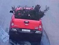 Vụ gốc hồng cổ 20 năm tuổi bị đào trộm tại vườn: Công an ráo riết truy tìm thủ phạm