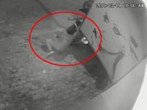 Clip: Bất ngờ bị 2 đối tượng dùng thòng lọng cướp chó, thanh niên cố gắng giữ lại thì bị kéo lê hàng chục mét trên đường